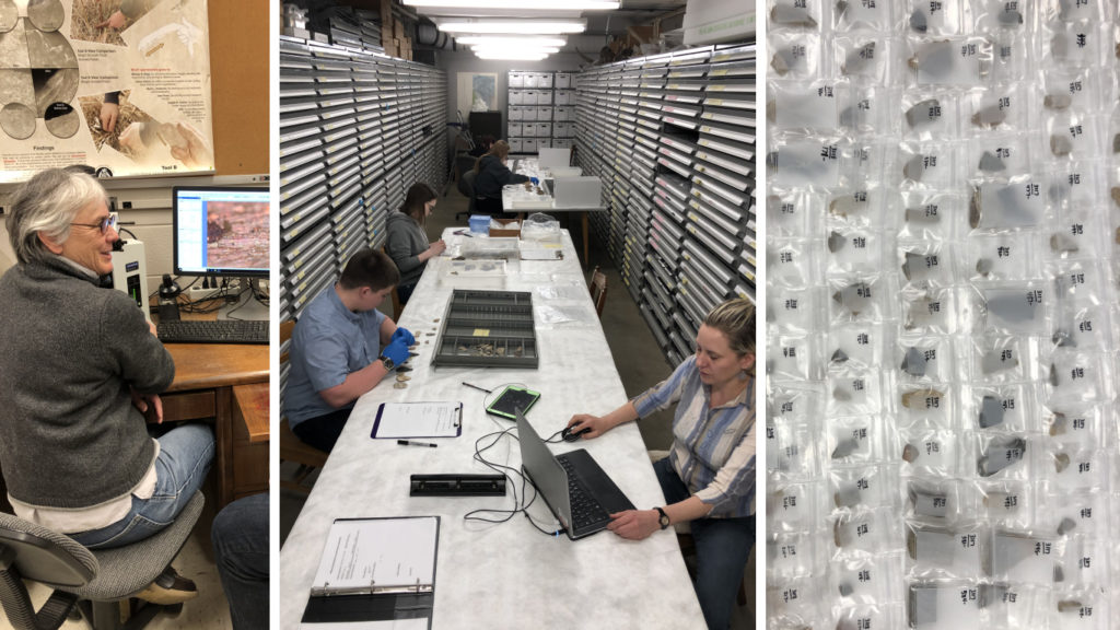 Collage of three images: on left is curator at desk, middle is a group of people working in type collection room, right is artifacts in numbered bags.